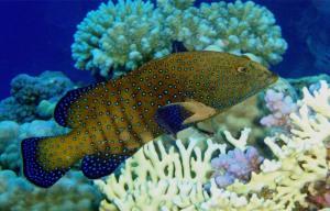 fish_ss9_197423
